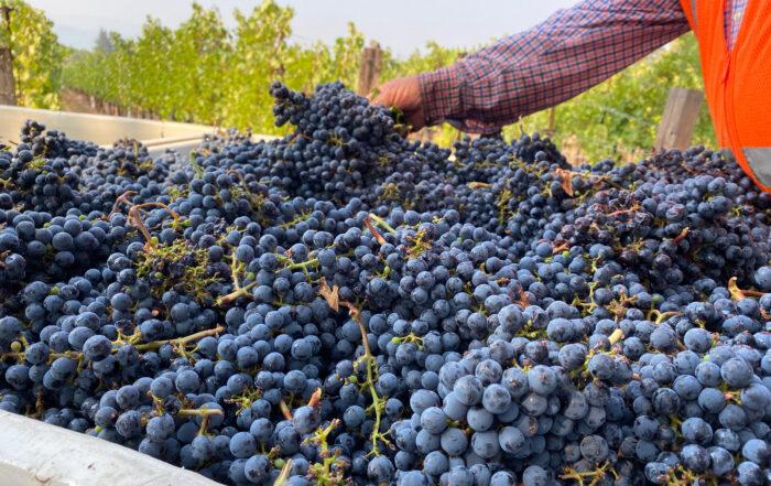 B Cellars Harvest 8.31.20